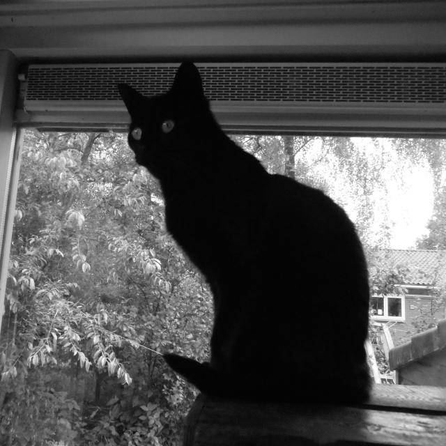 negra, mijn kat, die misschien wel toxoplasmose met zich meedraagt